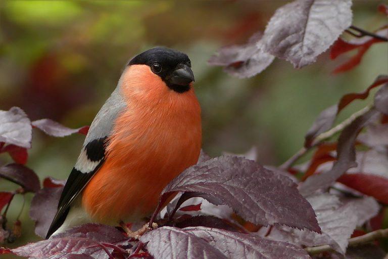 כיצד למשוך ציפורים לגינה